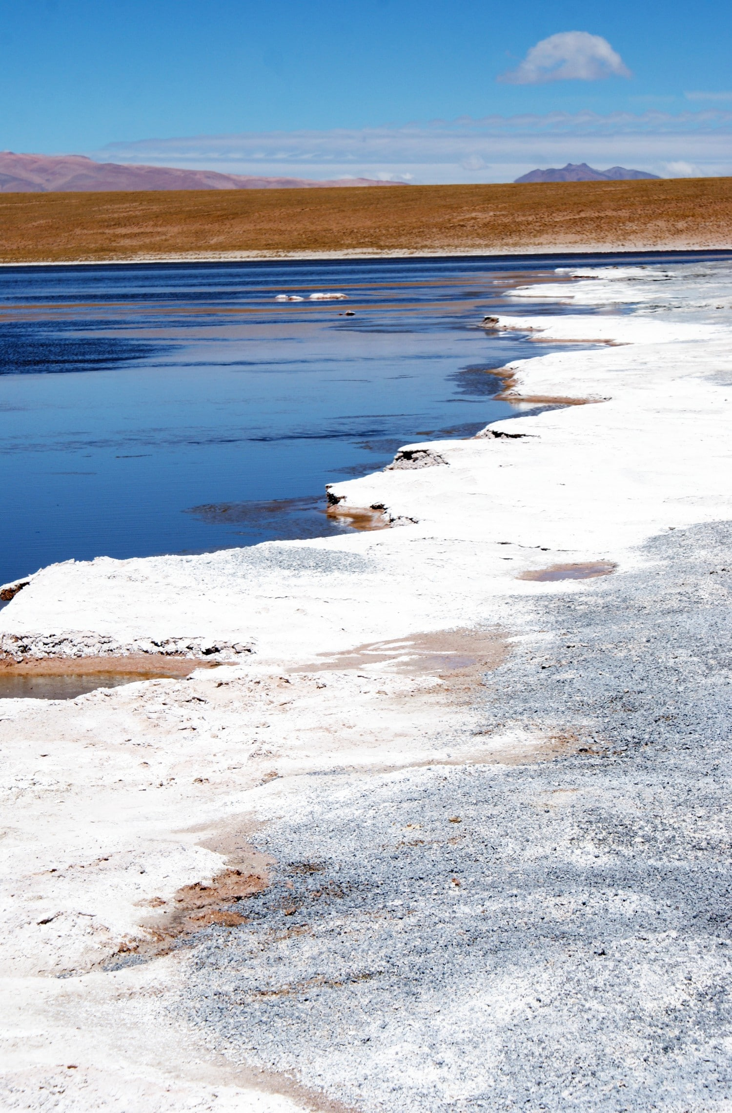 Laguna Blanca - shot of the thick salt crust at the edge of the lake