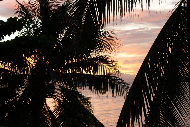 Incredible sunset with Palm Tree in Zanzibar