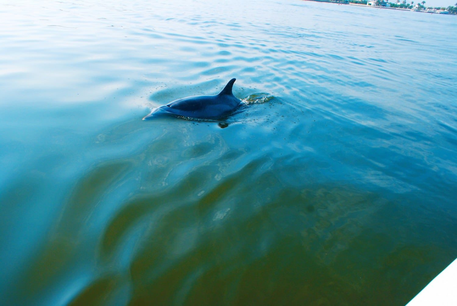 Dolphin Spotting in Paracas Peru