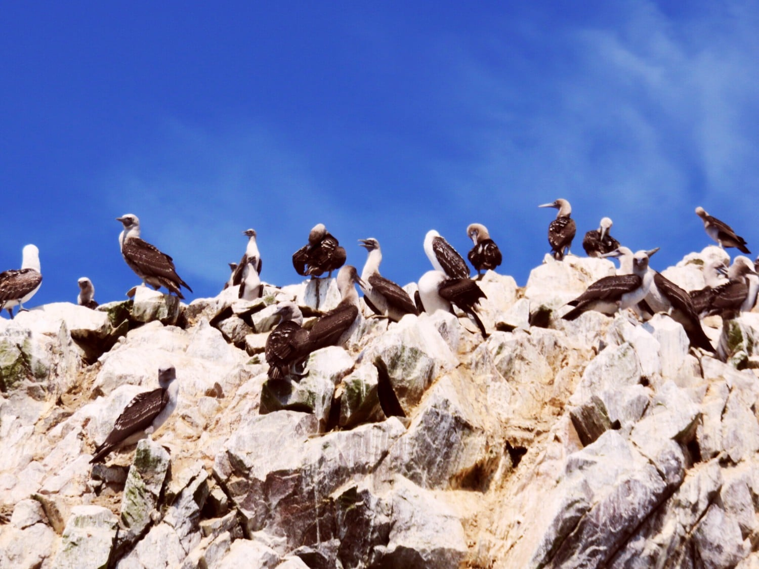 Ballestas Islands Wildlife Spotting In Peru The