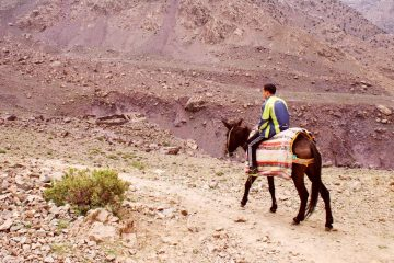Guide riding a mule in the Atlas Mountains