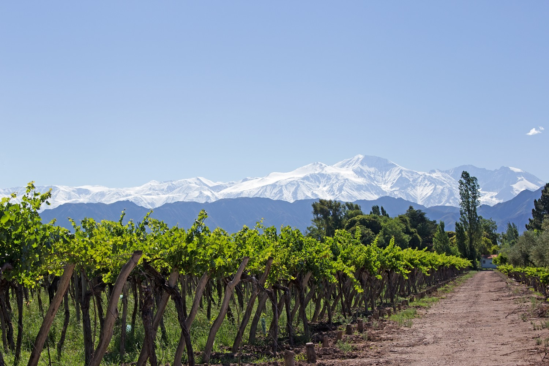 Go wine tasting in Mendoza Argentina