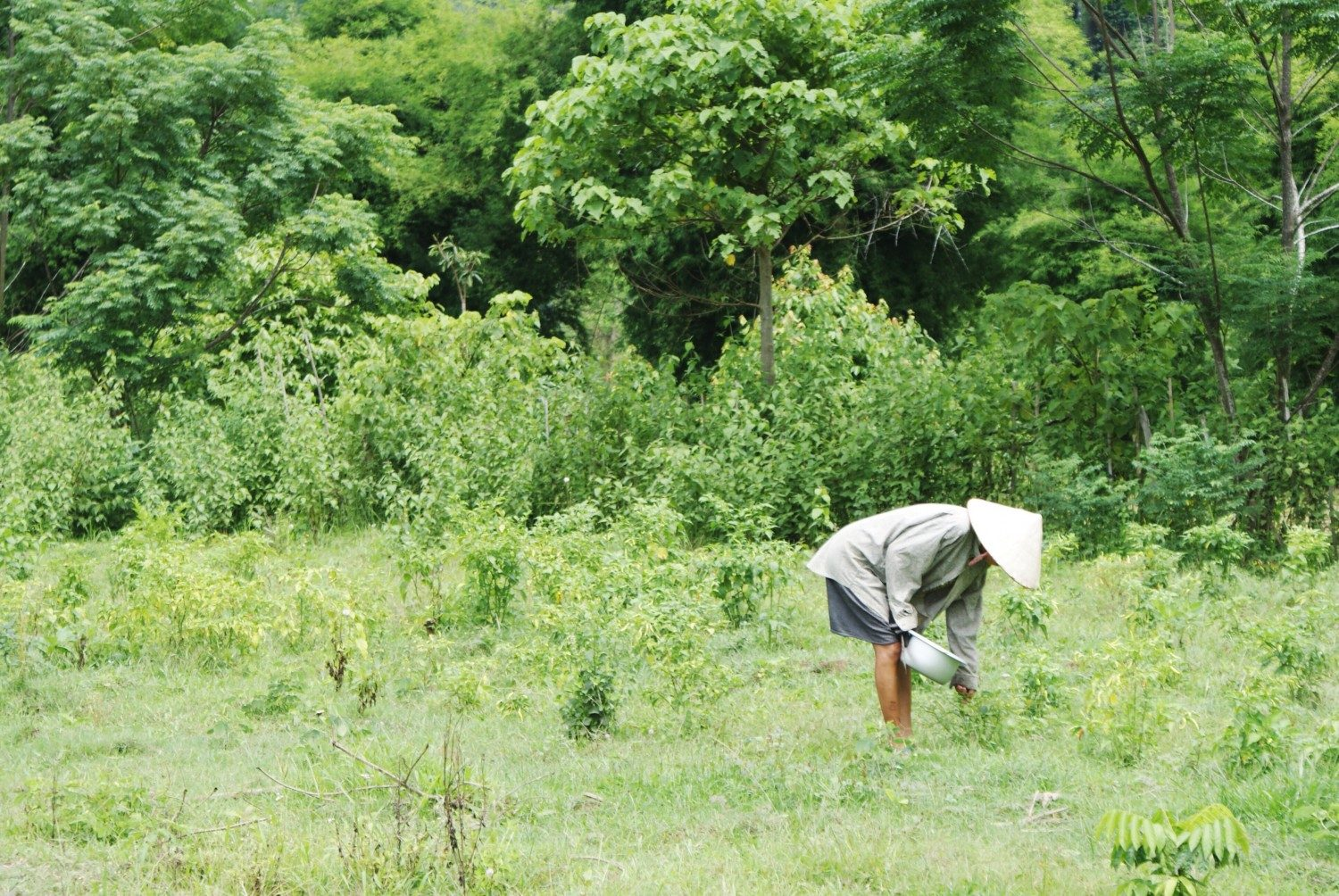 Working in the fields near Vang Vieng Laos