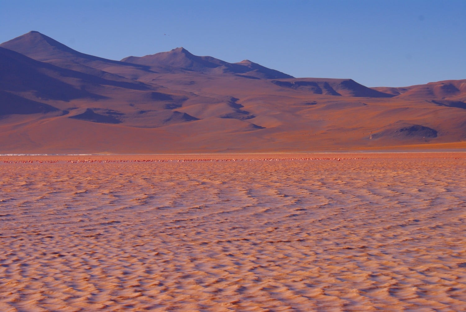 Laguna Colorada - Amazing things to do in Bolivia. Read more.
