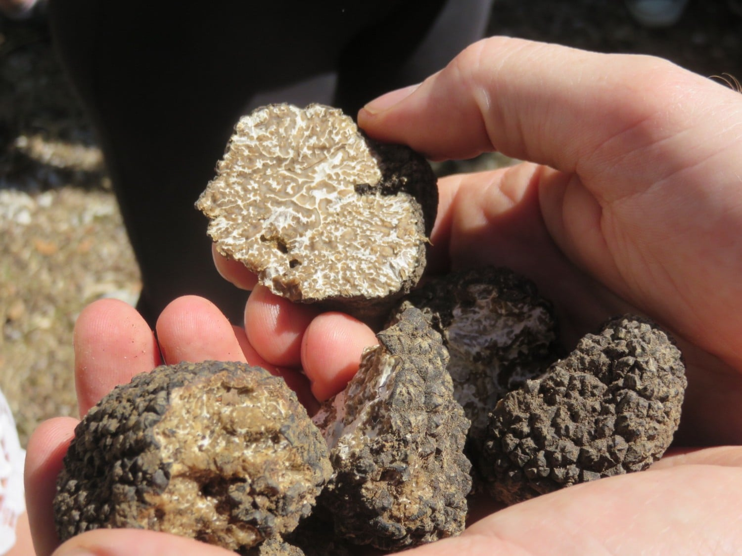 Truffle hunting in Umbria - one of the best things to do in Umbria