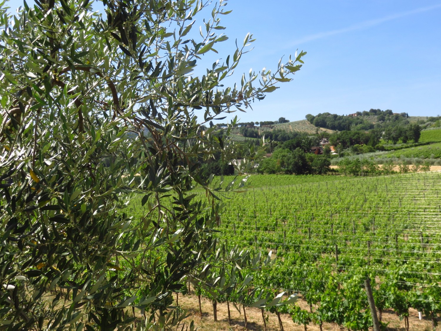 Caprai Winery - one of the best things to do in Umbria