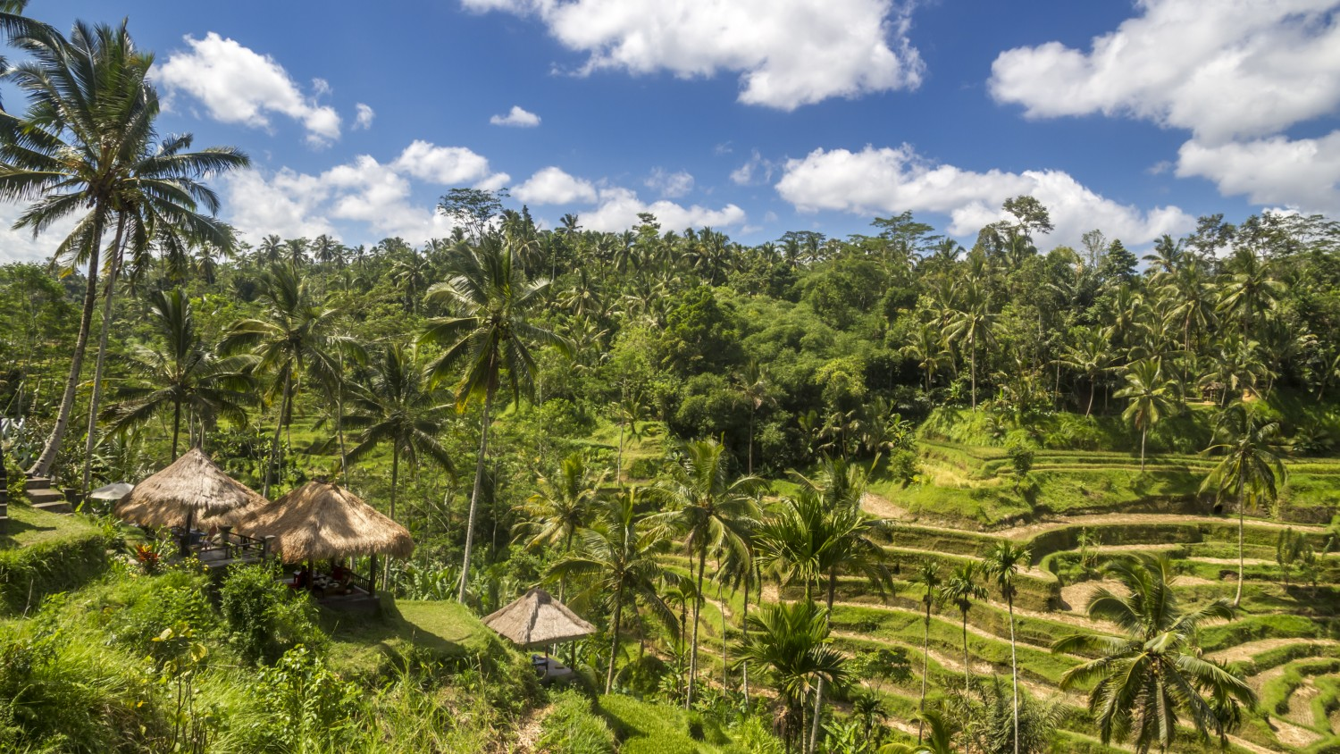 Ubud's famous rice terraces