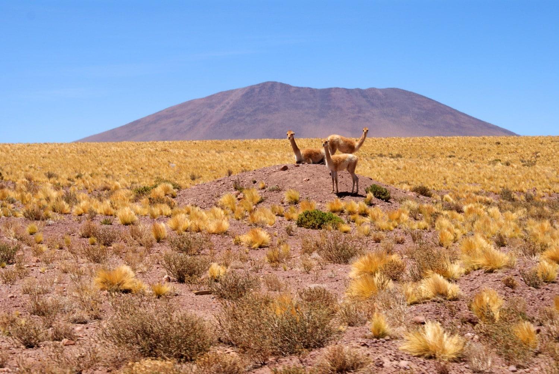 The Best Things to do in the Atacama Desert