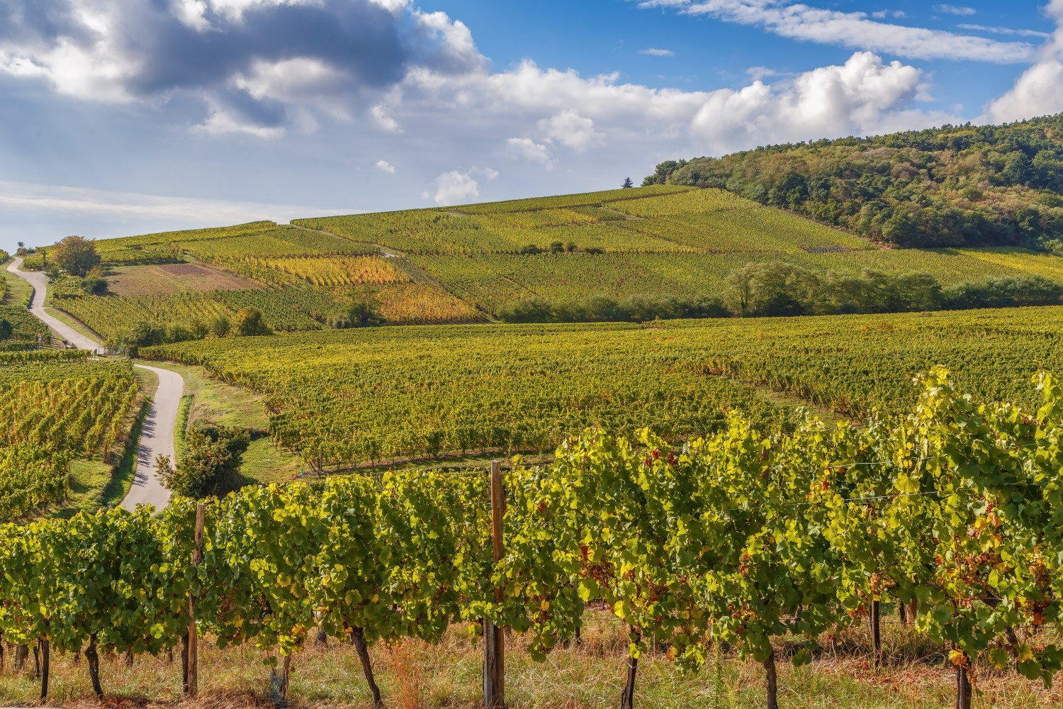 Hiking the Alsace Wine Route