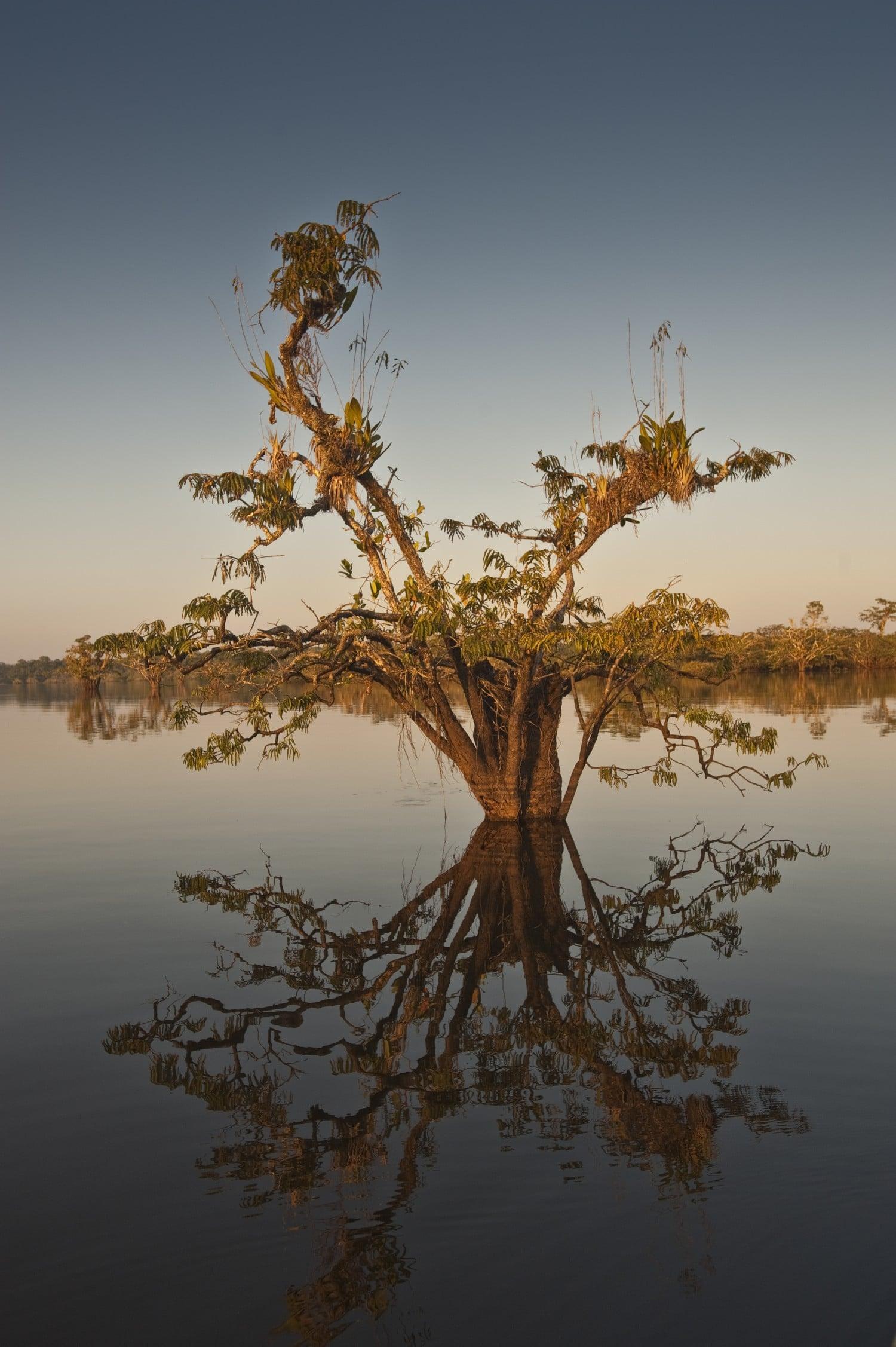 Amazon Rainforest South America Itinerary