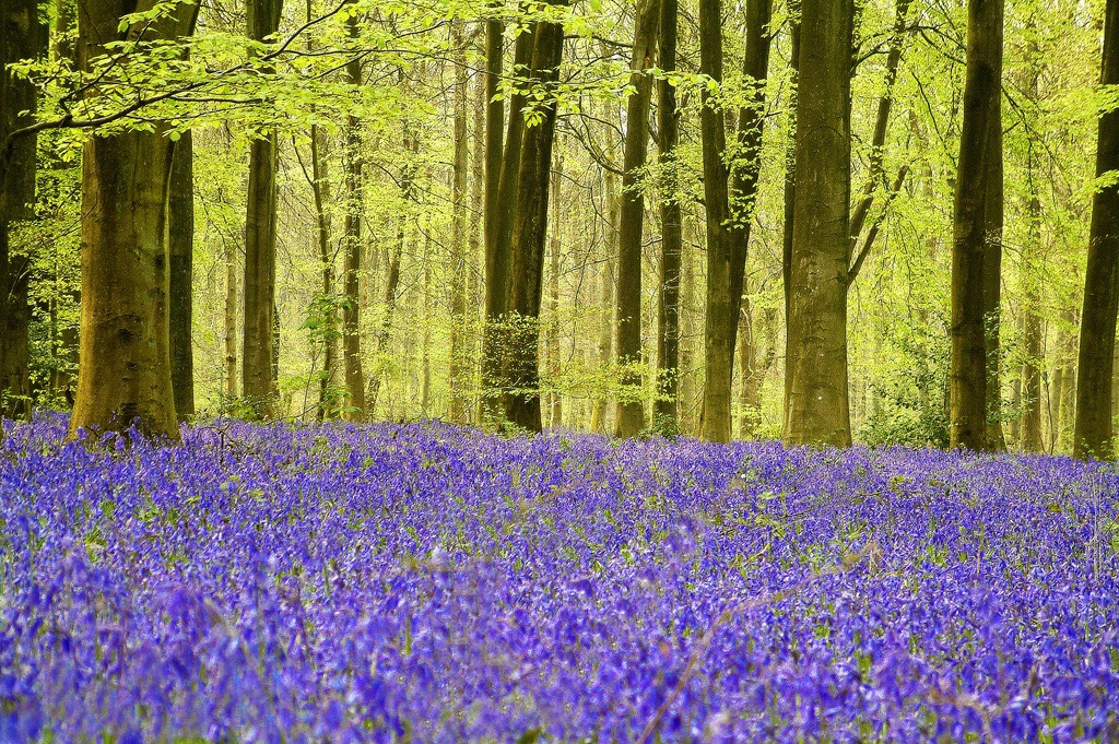 Micheldever Wood - Bucket List Ideas UK