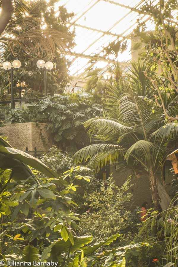 Concrete and foliage