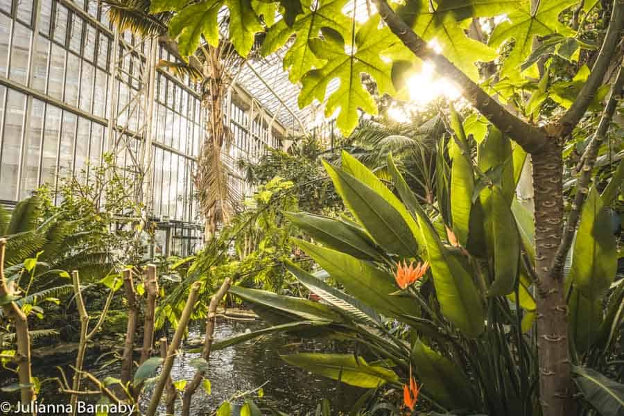 Inside the Barbican's Conservatory