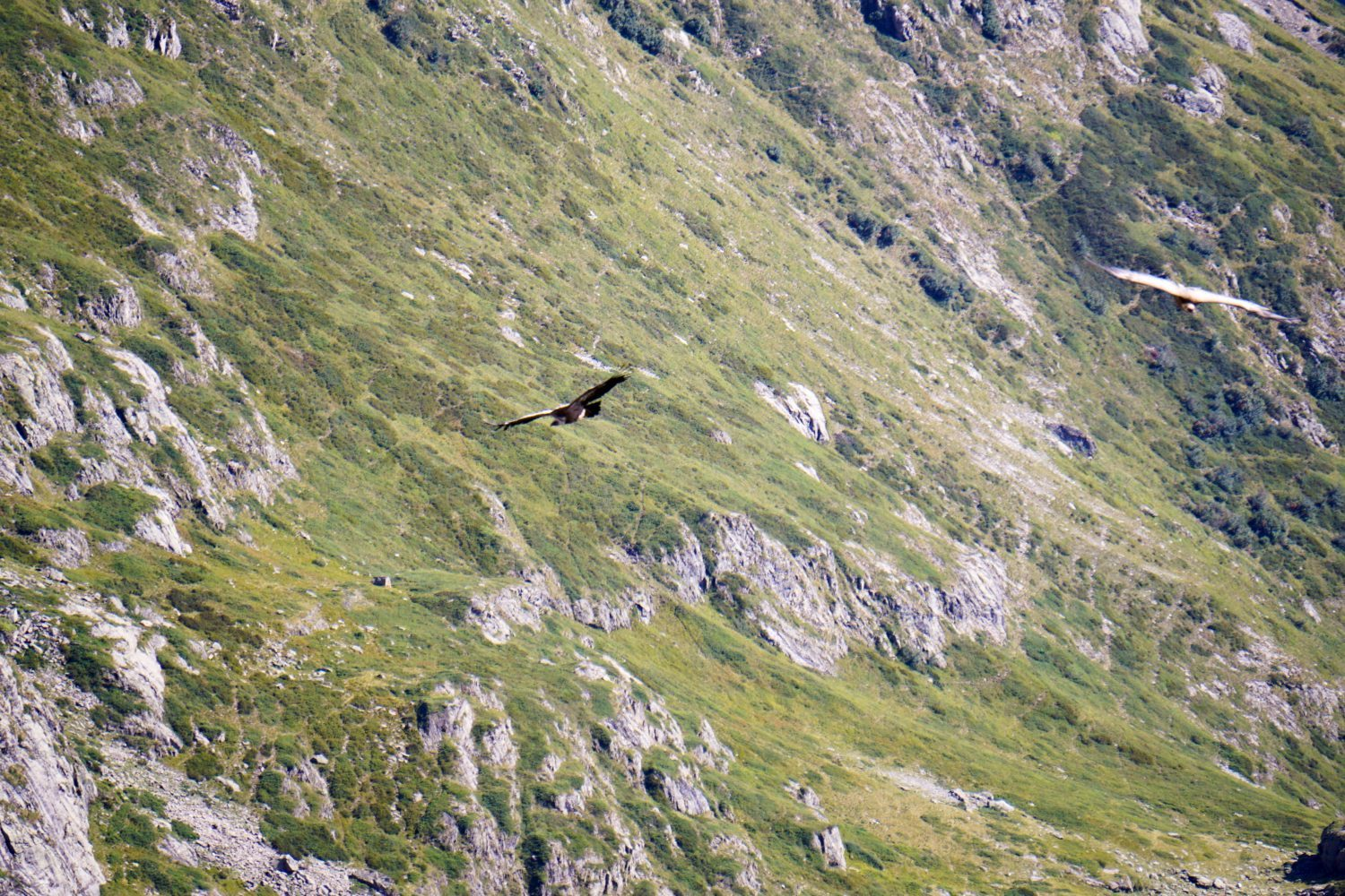 Ecrins National Park - Hiking in the French Alps-8