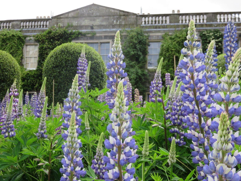 Northern Ireland Weekend Break - Flowers