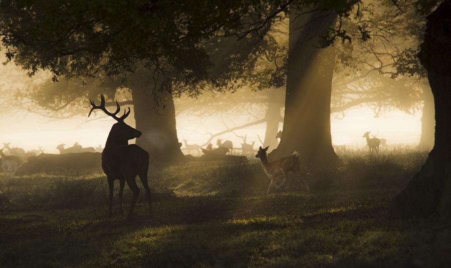 The Deer in Richmond Park