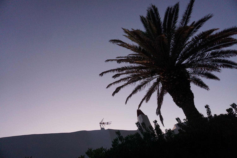 Sunset in Menorca - Palm Trees