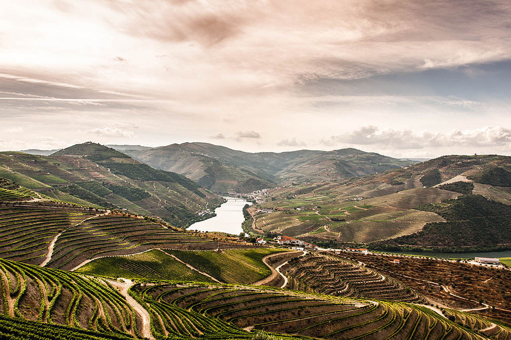 The Douro Valley Vineyards