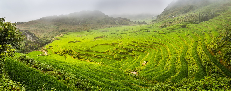rice fields SAPA
