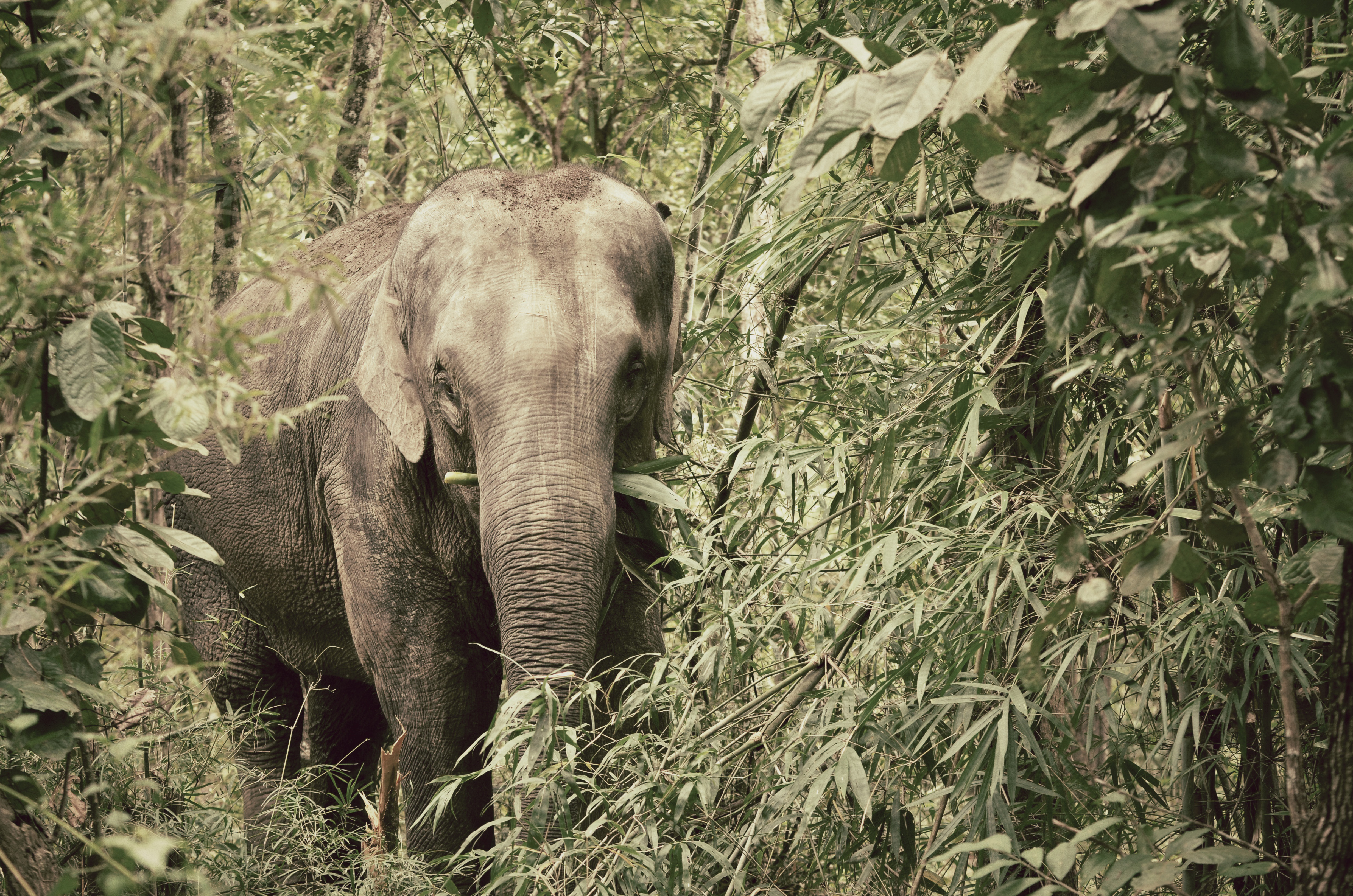 Visit the Elephant Nature Park when you are in Chiang Mai