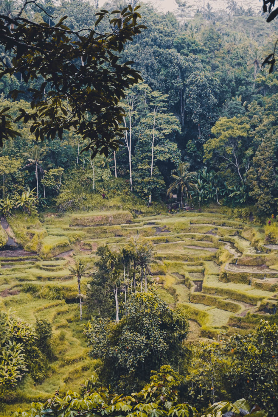 Tegalalang Rice Terraces - Ubud - Bali Itinerary #traveldestinations #bali #beautifulplaces