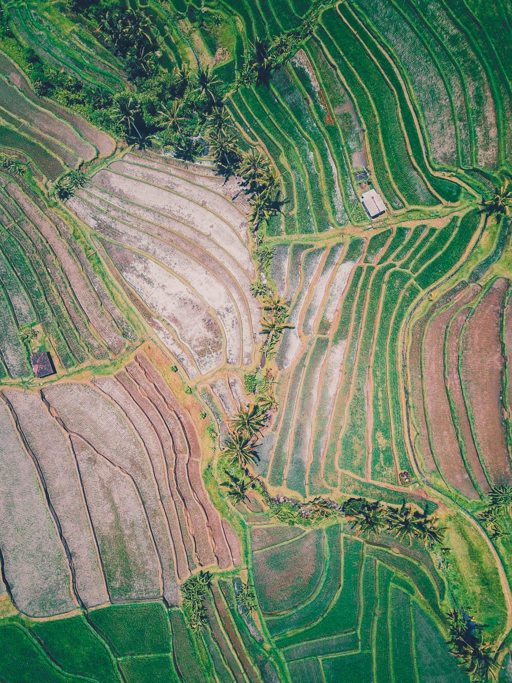 Jatiluwih Rice Terraces, Bali #dronephotography #travel