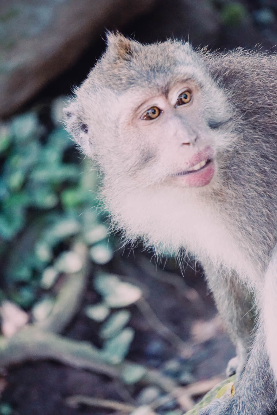 Ubud Monkey Forest - Best Things to do in Bali #traveldestinations #bali #beautifulplaces