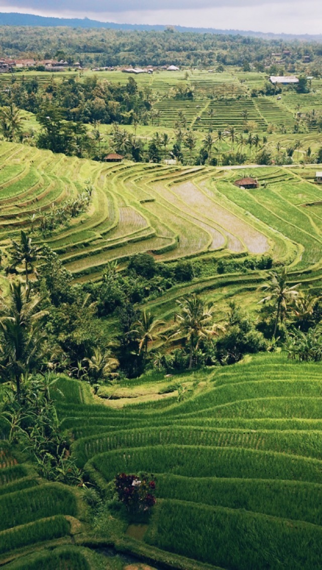 Jatiluweh Rice Terraces - Best Things to do in Tabanan, Bali #beautifulplaces #traveldestinations #indonesia