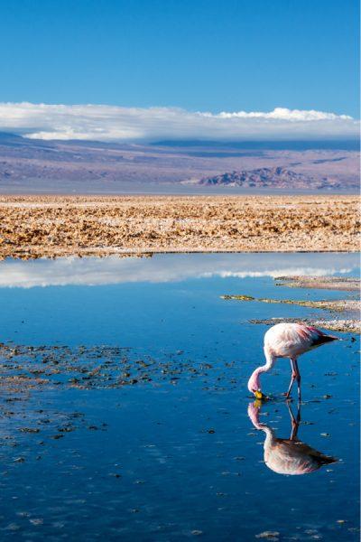 Laguna Chaxa - Atacama Desert