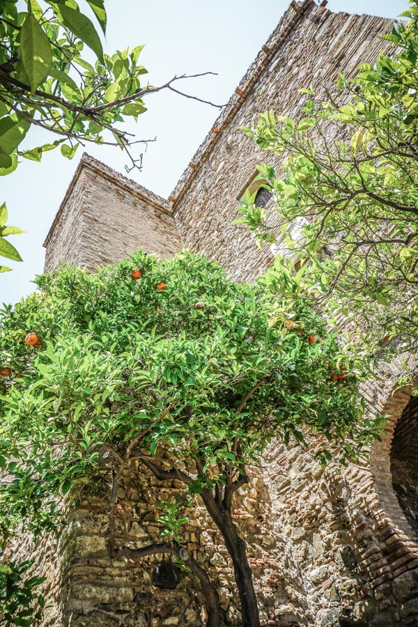 Orange trees and restored buildings in the Malaga Palace. Malaga, Spain might be best known as a beach destination, but visitor's shouldn't miss the gorgeous Alcazaba palace. Hands down the best thing to do during your travels to Malaga. Here's why... #spain #europe #traveltips