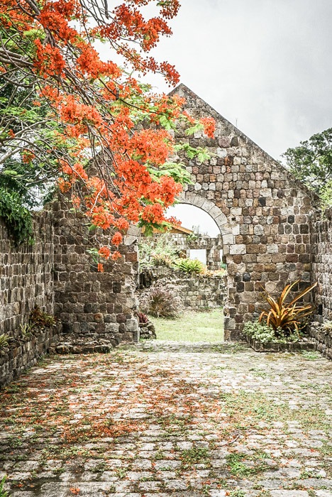 Part of the original Fothergill's Estate at nevis Heritage Village #travel #caribbean #traveldestinations