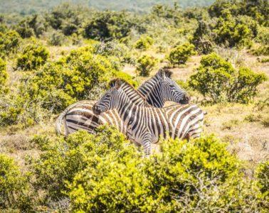 Addo Elephant National Park - Safari Guide