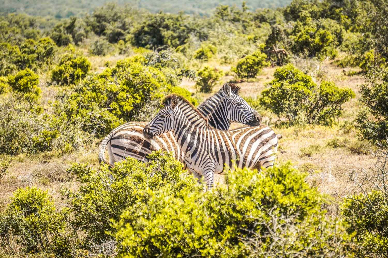 Safari in Addo Elephant National Park: A Step-by-Step Guide
