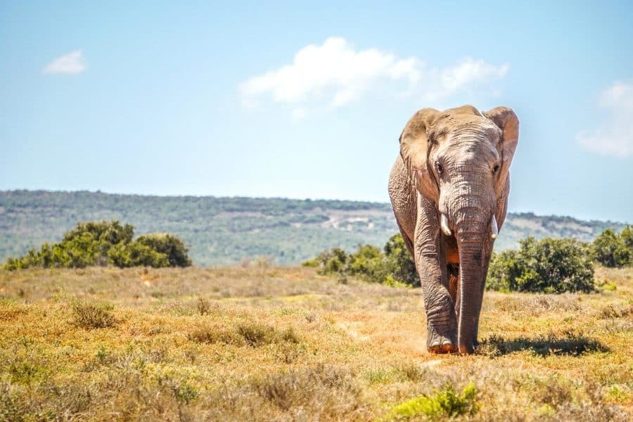 Addo Elephant Park Activities