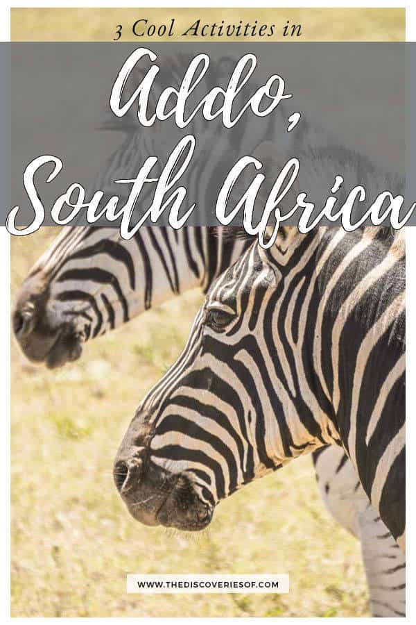 Safari, adventure, wildlife - Here's what you shouldn't miss in Addo Elephant National Park in South Africa #travel #southafrica #safari