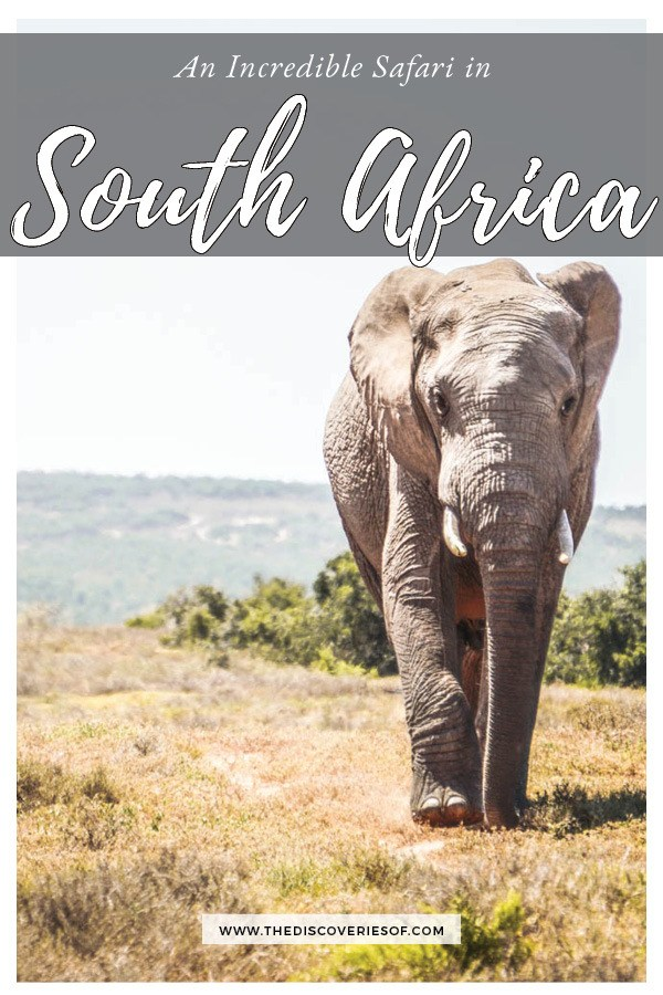 Planning an African safari? Here's why you will love Addo Elephant National Park in South Africa #travel #africa #adventure