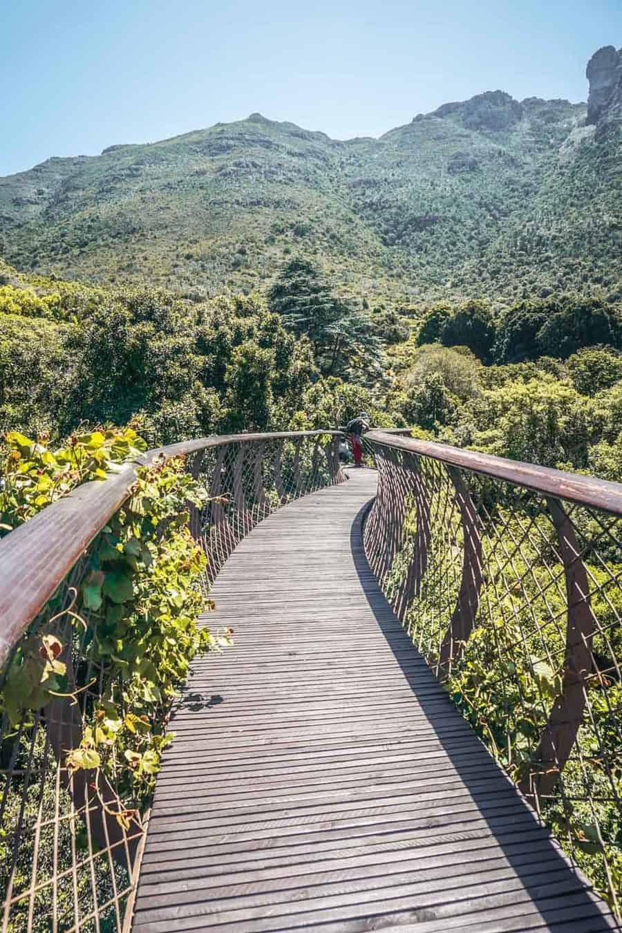 Boomslang walkway at the Kirstenbosch National Botanical Gardens