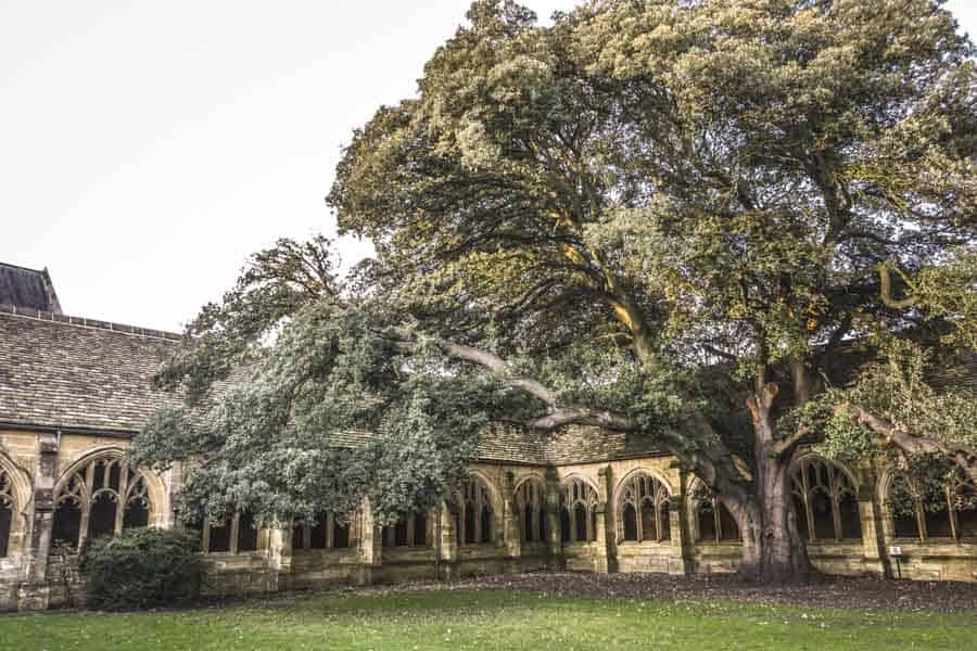 Tree in New College Cloisters used as a harry potter filming location