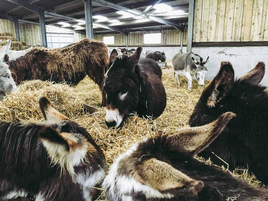 Flicka Donkey Sanctuary