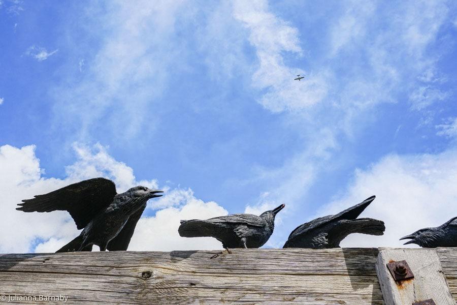 Ravens - Benson Sculture Garden