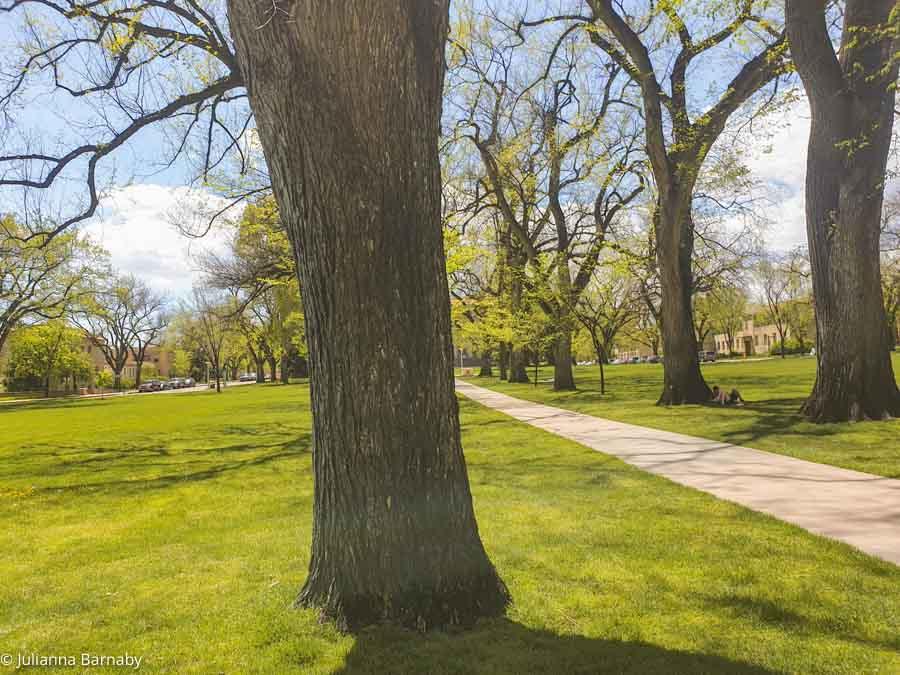 Parklife in Fort Collins