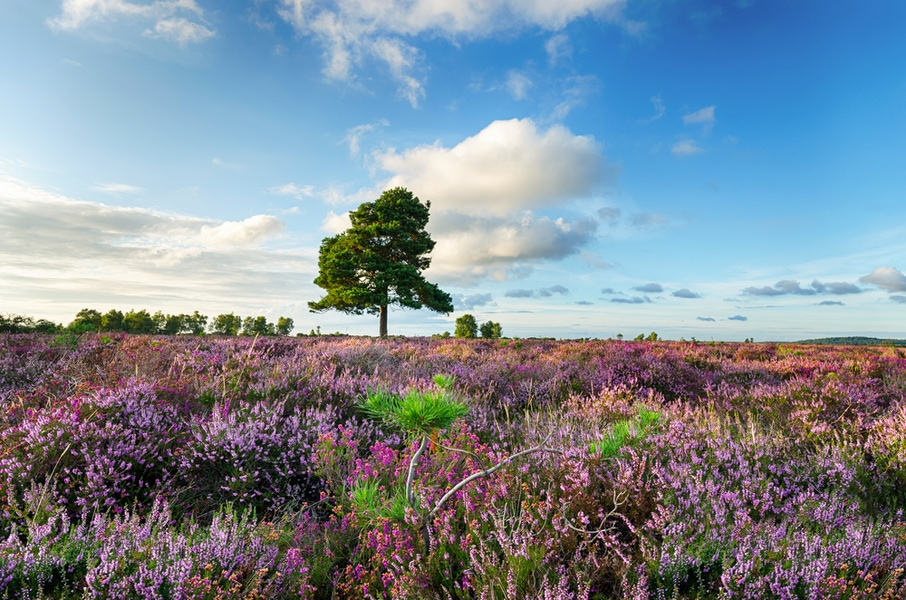 Time to Discover: Things to do in the New Forest
