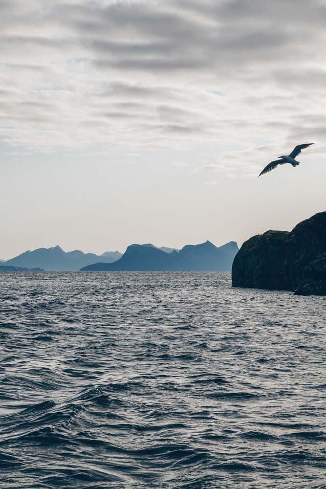 Gulls following the boat
