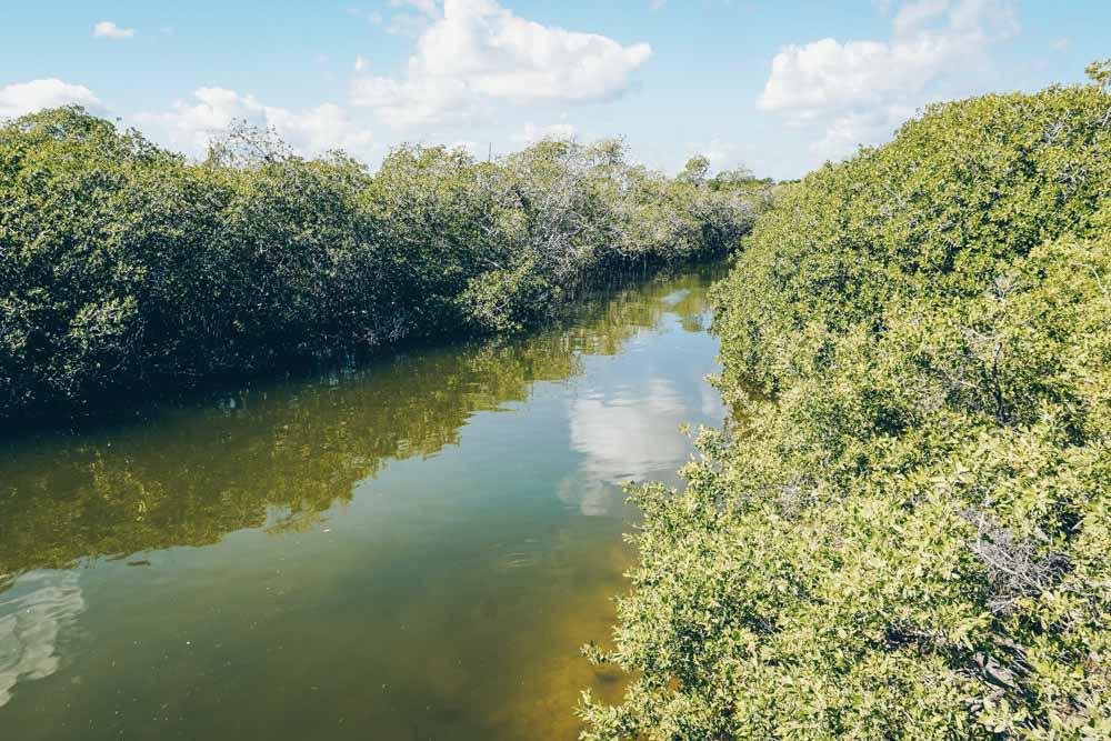 Mangroves in Sian Ka'an