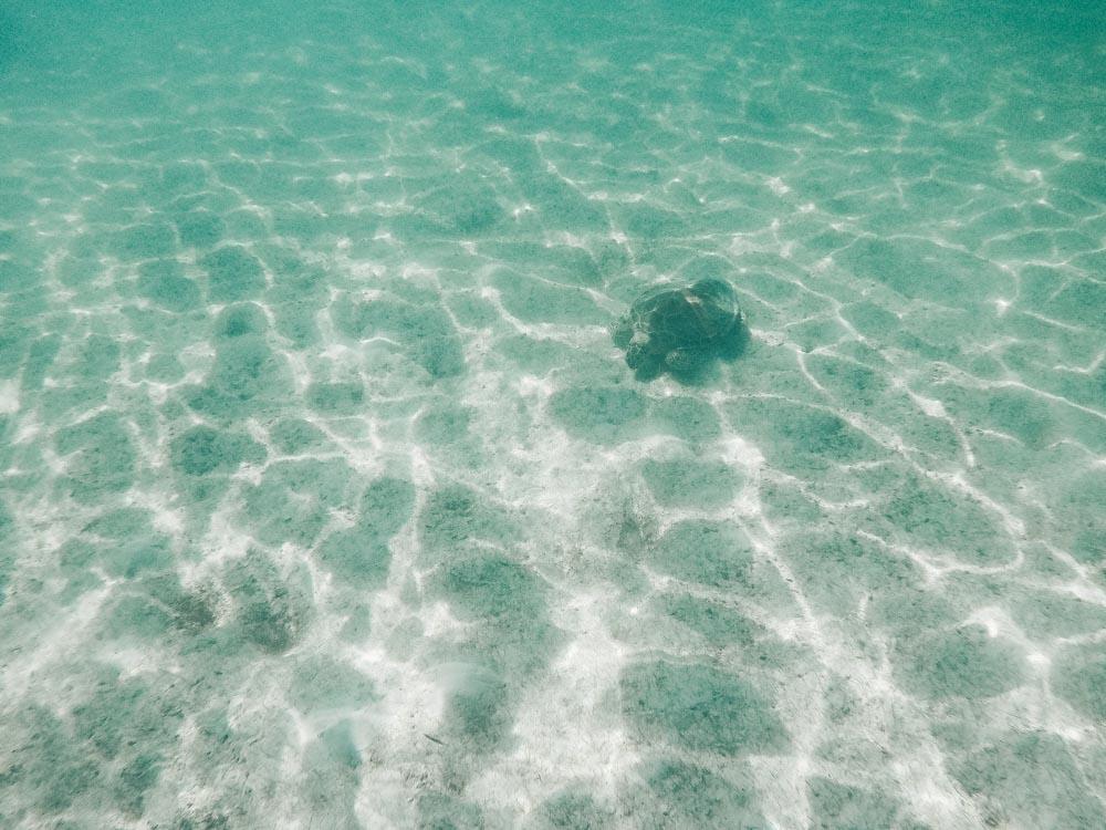 Swimming with the Sea Turtles at Akumal